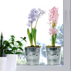 Stickers pour fenêtre Vases