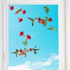 Stickers pour fenêtre Hummingbird