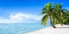 Toile Caraïbes 50x100cm