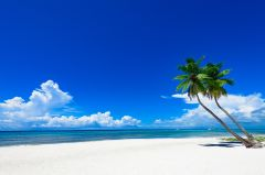 Toile Caraïbes 78x118cm
